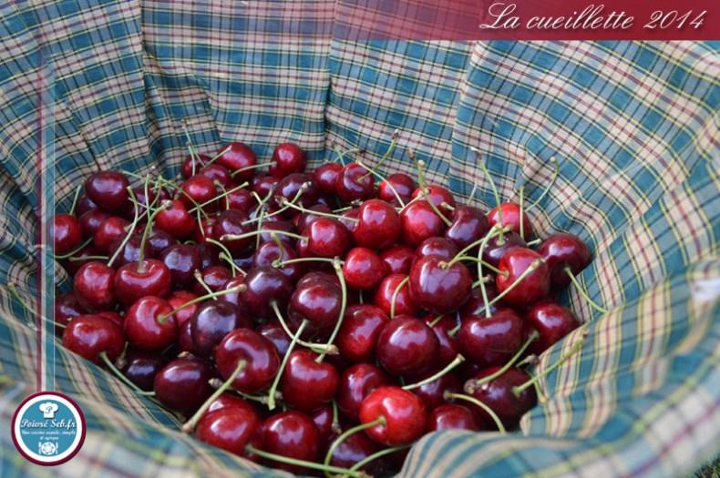 Clafoutis_cerises_chocolat_noir_Cueillette