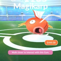 Magikarp now appears as an easy-to-beat Raid Boss in Pokémon GO