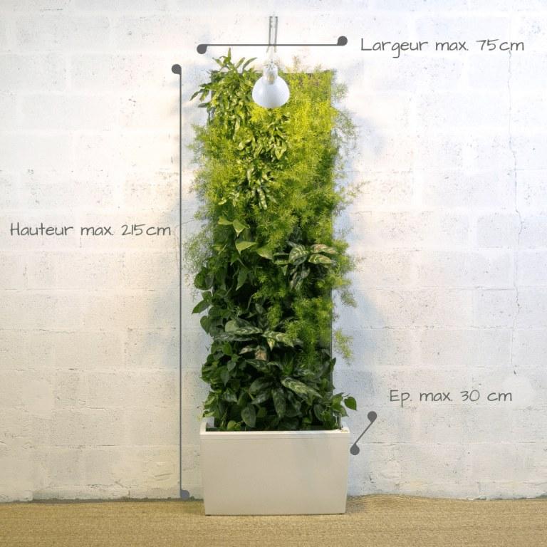 Schéma des différentes mesures du mur végétal : 215 cm de hauteur max, 75cm de largeur et 30 cm d'épaisseur du bac