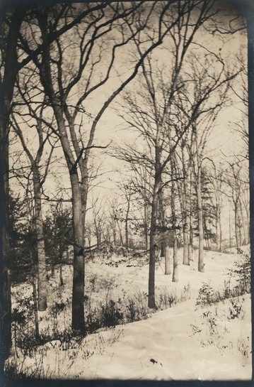 Vintage photo of the Livingston Wood, on the Livingston property. Title Livingston Wood Date 22 Dec 1886