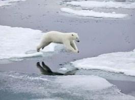 is a polar bear a mammal