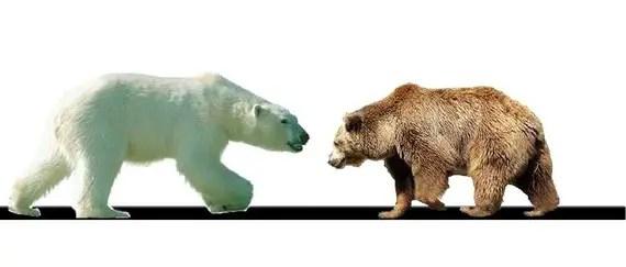 polar bear vs grizzly bear