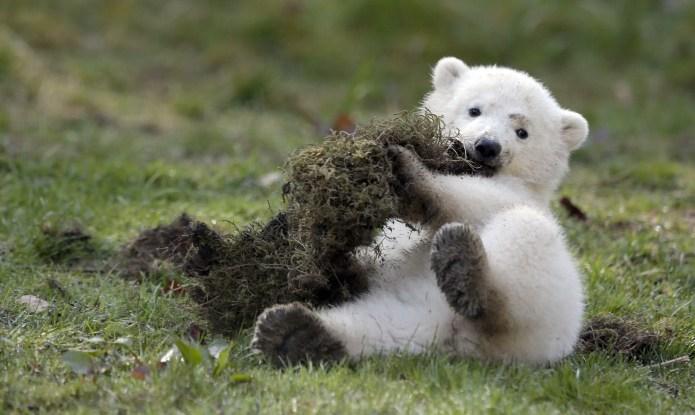 What Do You Call a Baby Polar Bear?
