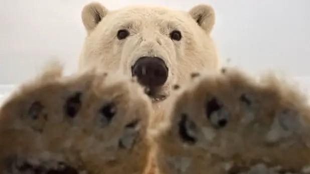 Do Polar Bears Poop in the Woods?