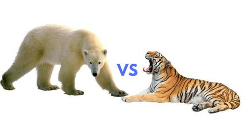 polar bear vs tiger