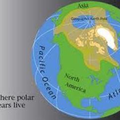 Polar Bear Fur Diagram Pontiac Aztek Stereo Wiring Where Do Bears Live? -