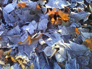Jesen ali zima?