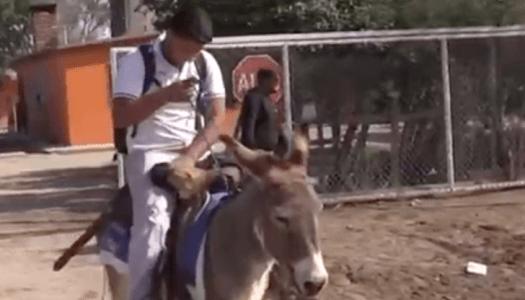 """Éste joven va a la escuela montando a """"Peña Nieto"""", su burro"""