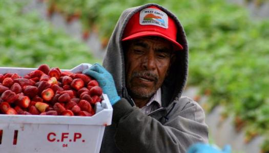 7 millones de mexicanos en EU ganan el doble de lo que perciben 19 millones en México