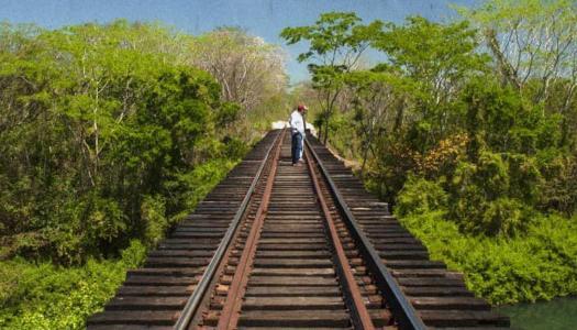 Tren Maya de AMLO no acabará con la selva; tendrá pasos de fauna