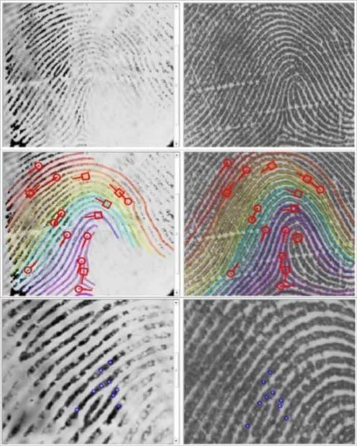 comparaison trace papillaire empreinte