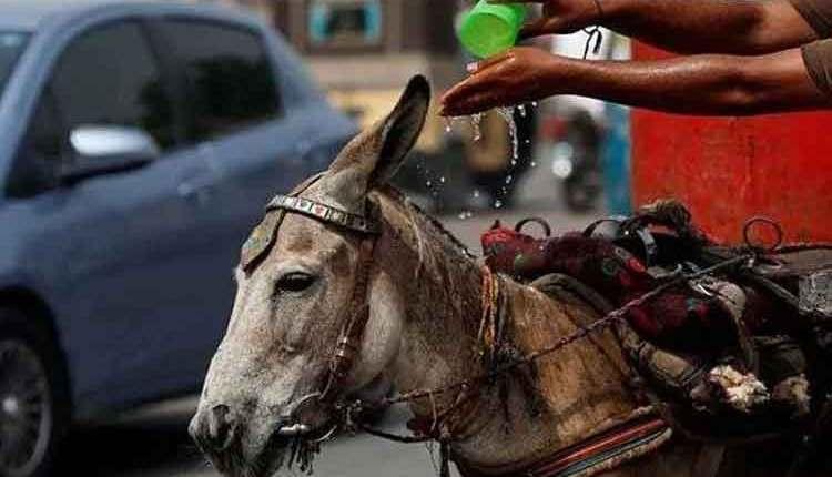 Donkey-Fair-in-Pakistan