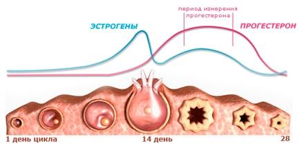 Прогестерон анализ крови подготовка к сдаче
