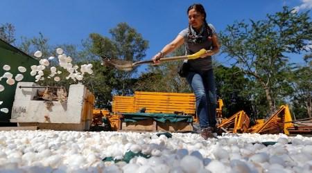 Organización limpia el contaminado río Santiago con cascarón de huevo