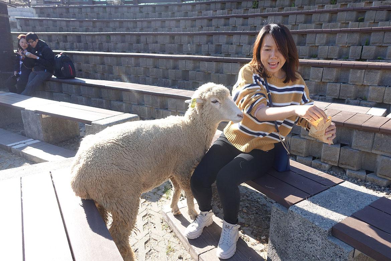 清境農場 cingjing farm