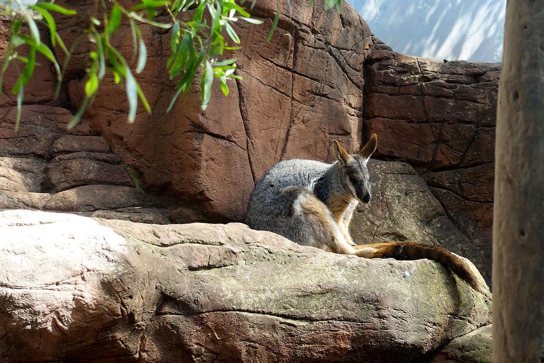 悉尼野生動物園 Wild Life Sydney Zoo
