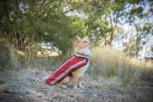 Friendly Dog Collars Small Caution Jacket - Polish and Paws