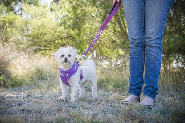 Friendly Dog Collars Do Not Feed Small Vest Harness and Short Lead - Polish and Paws