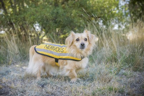 Friendly Dog Collars Small Nervous Harness and Jacket review - Polish and Paws