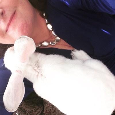 Carrot recipe rabbit