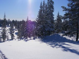 winter wonderland in norway with snow in the forest