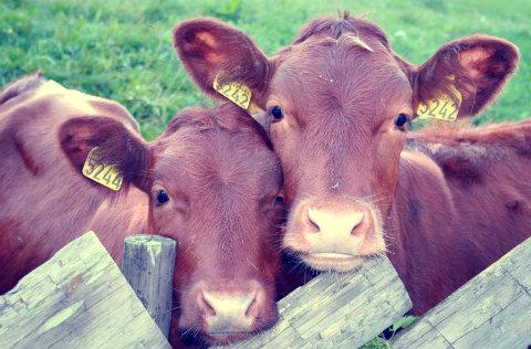 US dairy laws raw milk