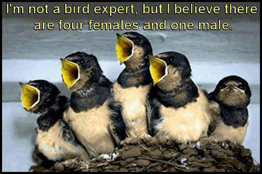 birds-singing-one-male-4-females