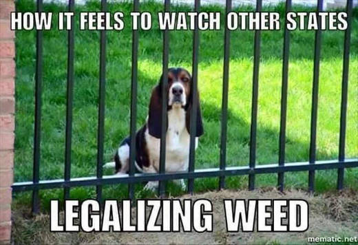 other-states-legalizing-weed-dog