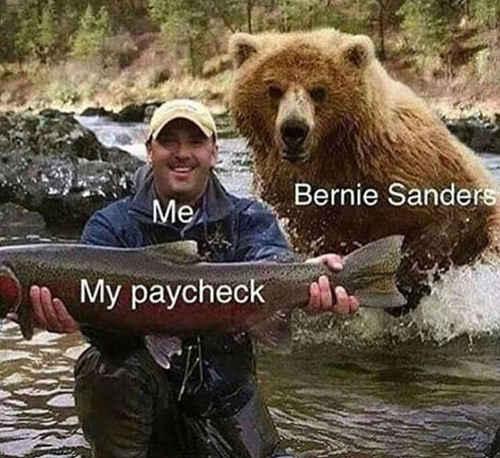 bear-paycheck-bernie-sanders
