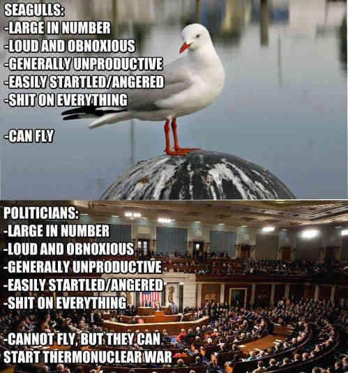 politicians-seagull-comparison