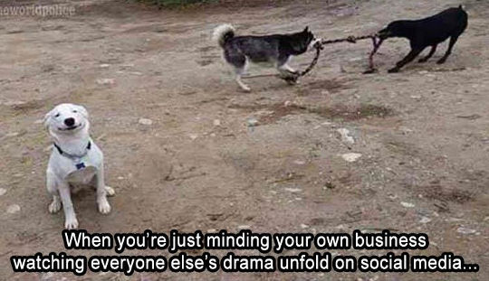 minding-your-own-business-social-media-dog