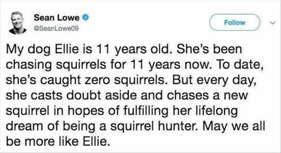 my-dog-ellie-dreams-squirrel-chaser