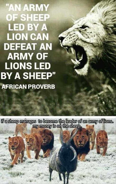 army-of-sheep-proverb-lead-by-lion-my-money-is-on-sheep