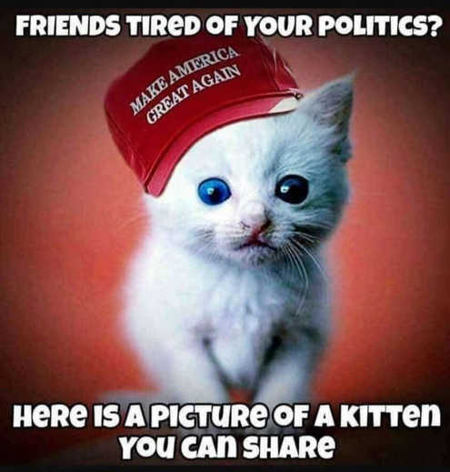 friends-tired-of-your-politics-here-is-picture-of-kitten-to-share-maga-hat