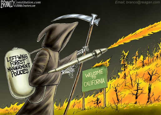 left-wing-forest-management-policiies-pumping-gasoline-on-fire-california