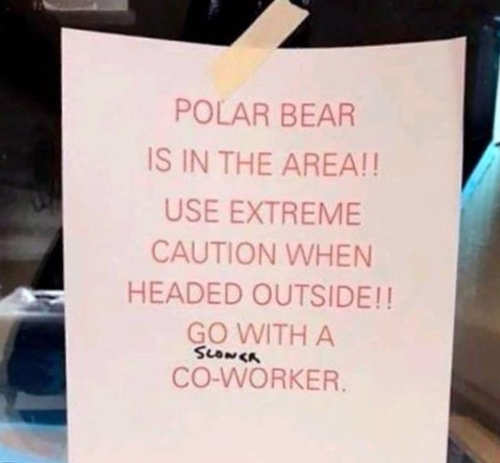 polar bear is in area use caution head outside with slower co-worker