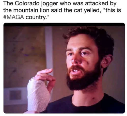 colorado jogger attacked by cat this is maga country