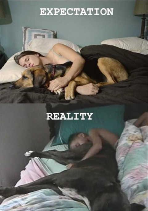 dog sleeping expectation vs realize