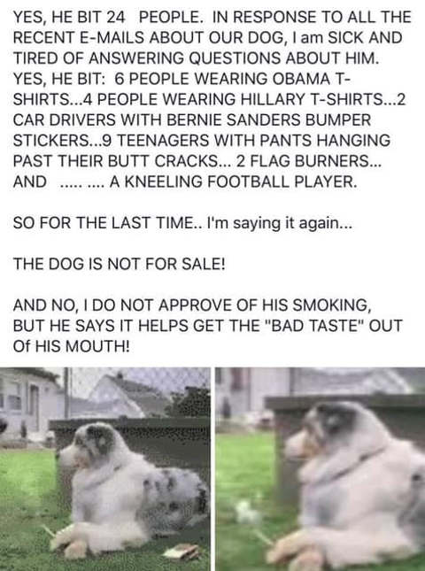 smoking dog bit hillary bernie obama supporters kneeling football player