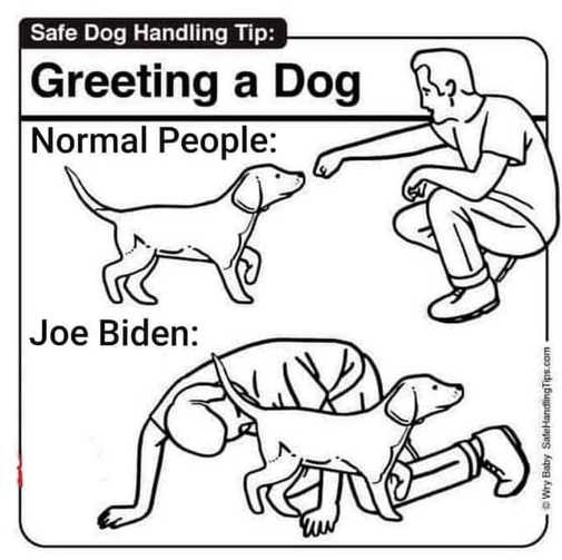 Joe Biden Meme Gallery - Politically Incorrect Humor