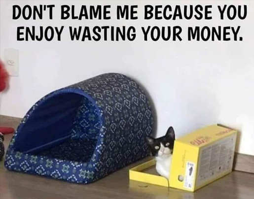 cat box dont blame me wasting your money