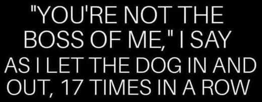 youre not the boss of me i say as i let dog out 17 times in a row