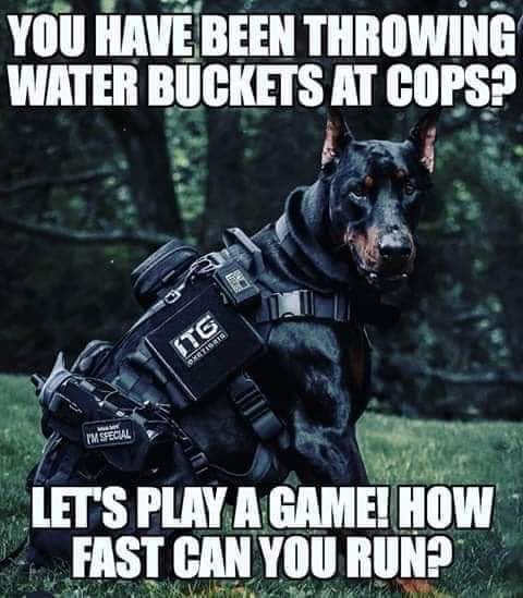 doberman youve been throwing water buckets at cops how fast can you run