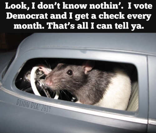 rat look i dont know nothing vote democrat get a check every month
