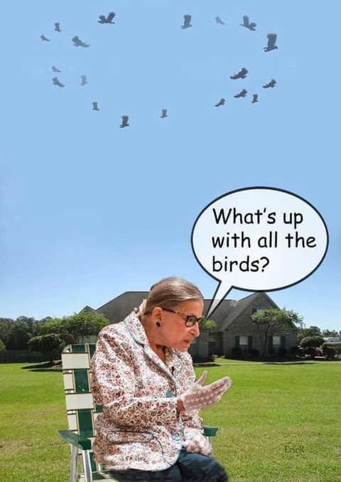ruth bader ginsburg whats up with all the birds