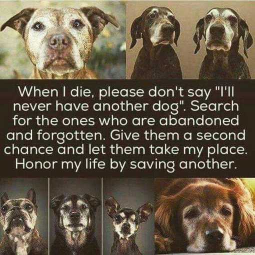 when i die please dont say ill have another dog give an abandoned shelter one a chance