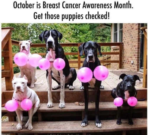 october is breast cancer awareness month get puppies checked