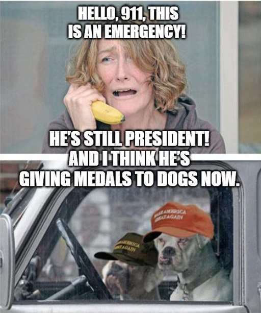 hello 911 trump is still president and giving medals to dogs now