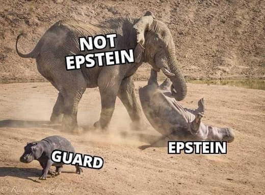 elephant not epstein rhino guard walking away
