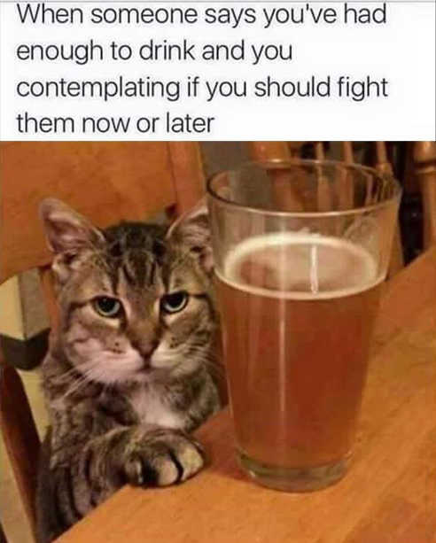cat when someone says had enough to drink should fight now or later